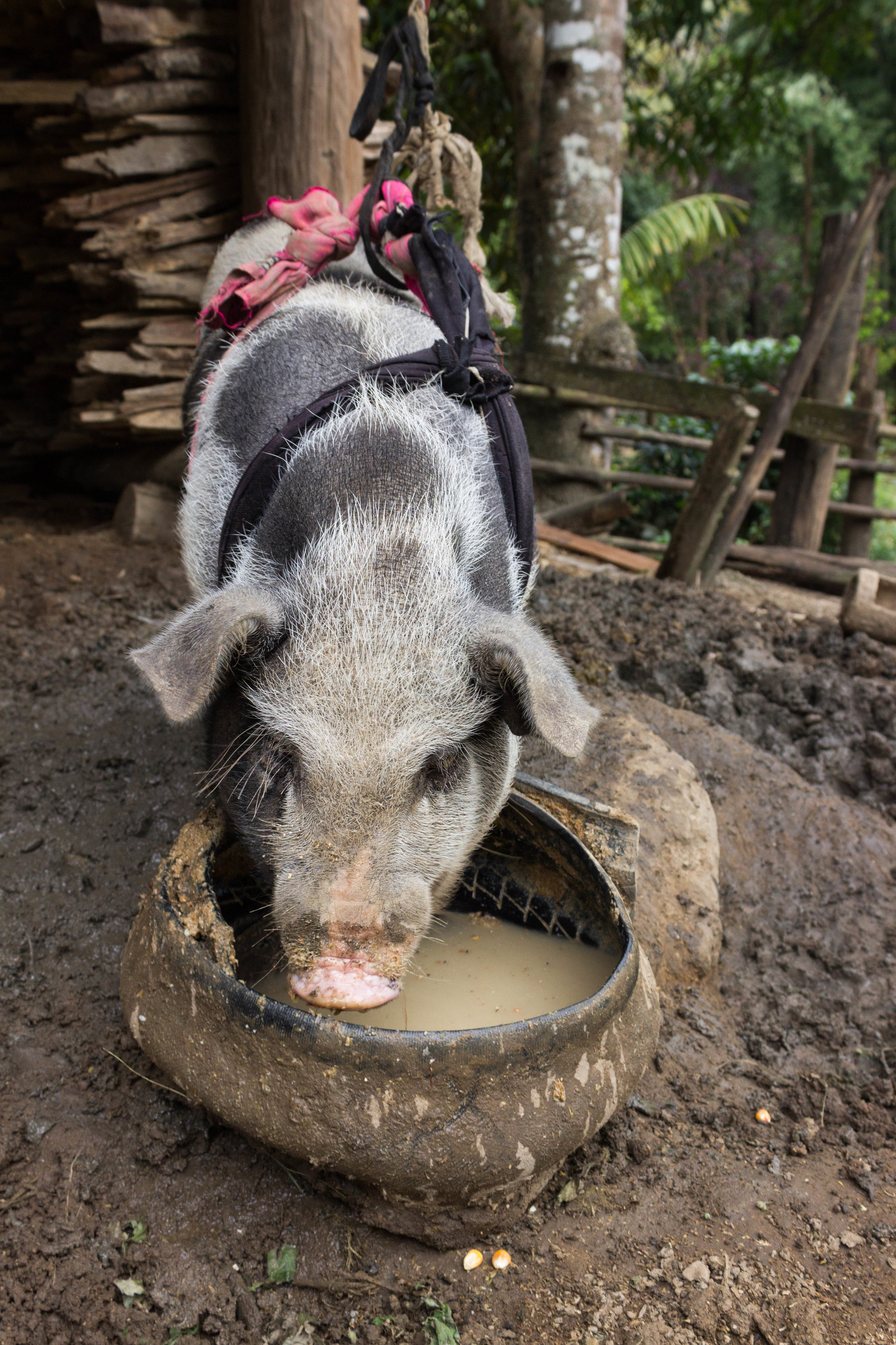 Farm animals were under every hut