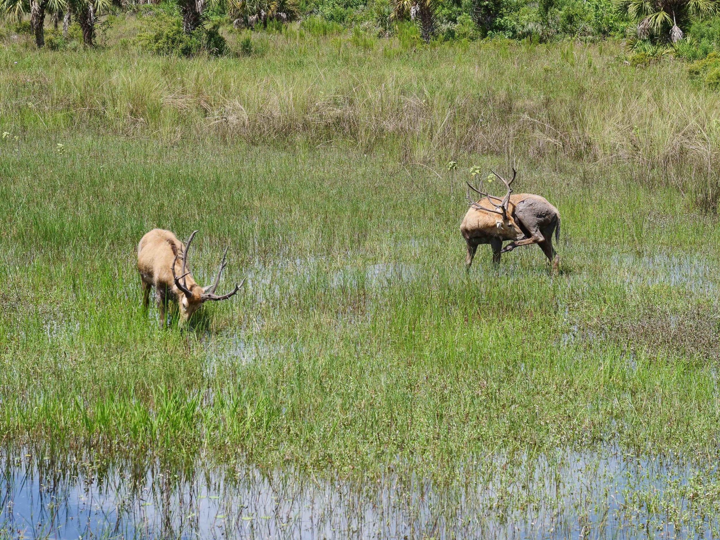 Wildlife in the Everglades.
