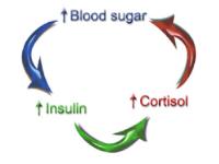 blood-sugar-cycle.png