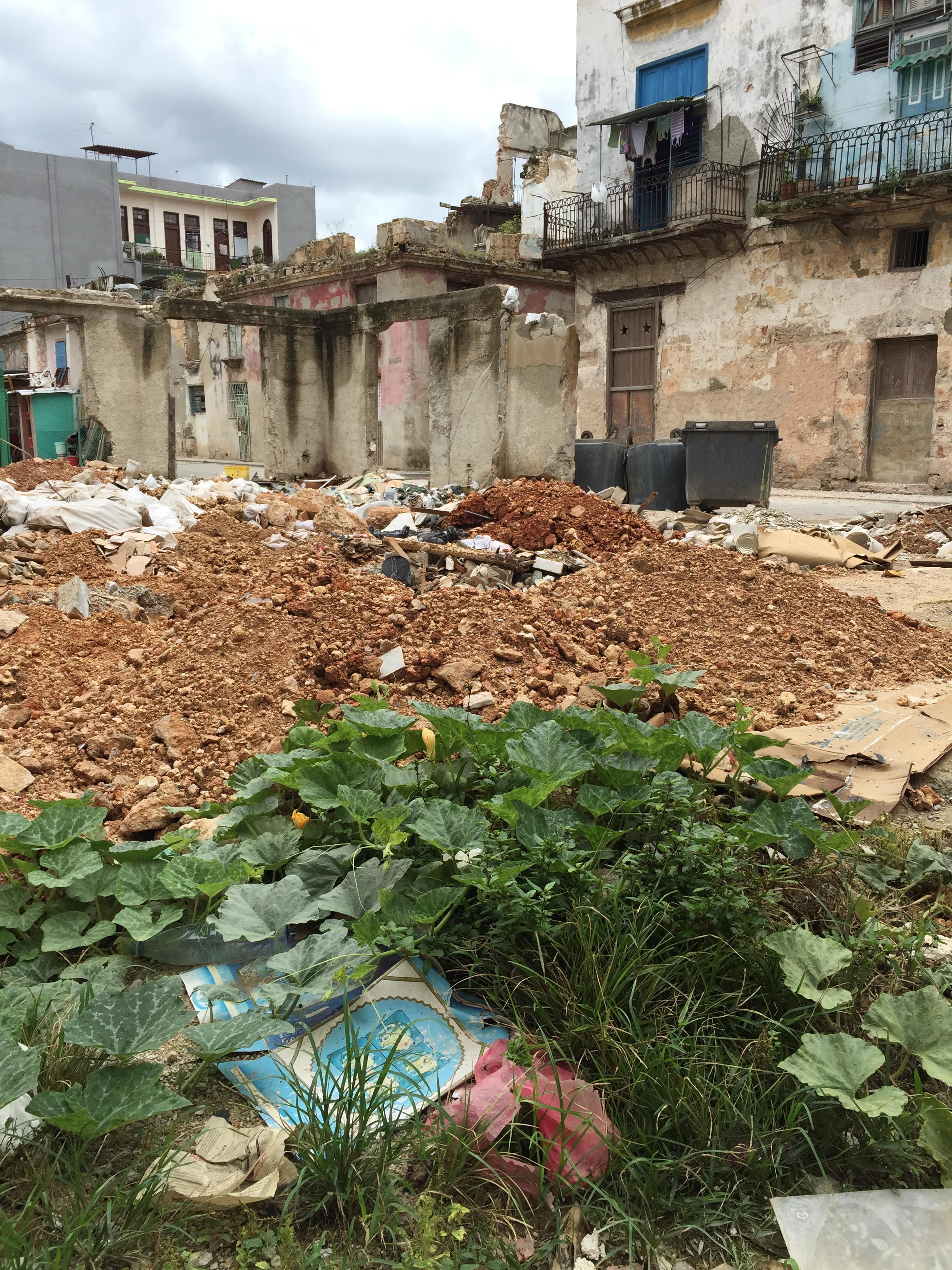 Compost Garden. Vegatables growing in a dump sight. Old Havana, Cuba, 2016