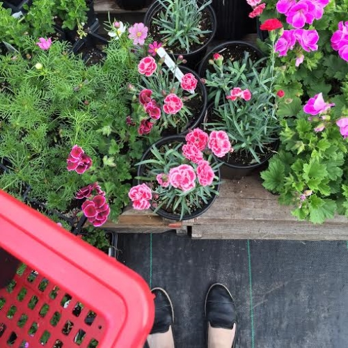 """Lately my """"me time"""" has been spent in beautiful garden centers. Being surrounded by vibrant plants brings me so much peace."""