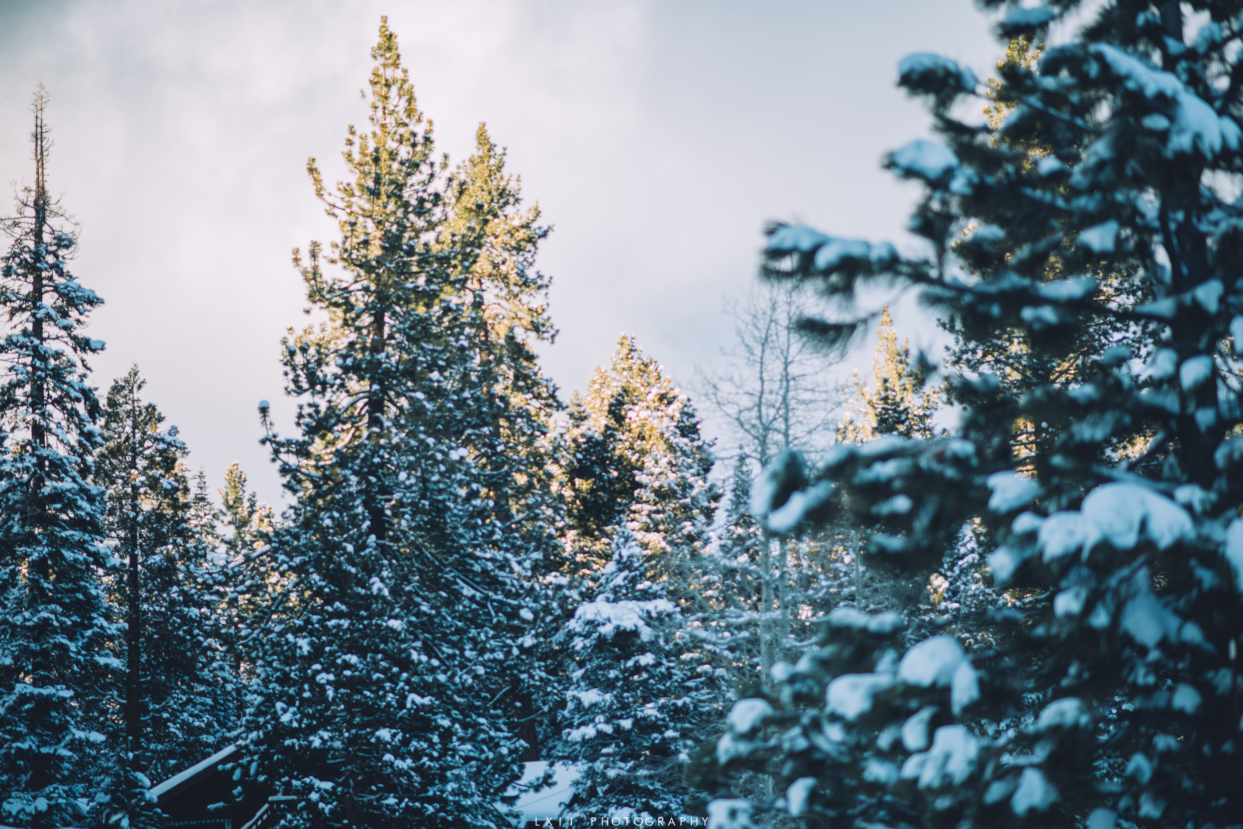 ChristmasVacation2015-7.jpg