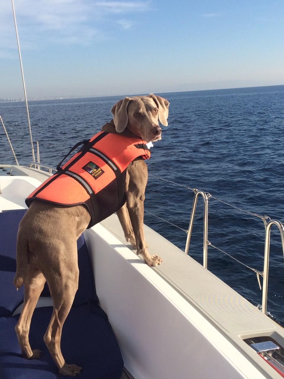 Juliette the Sea Dog.jpg