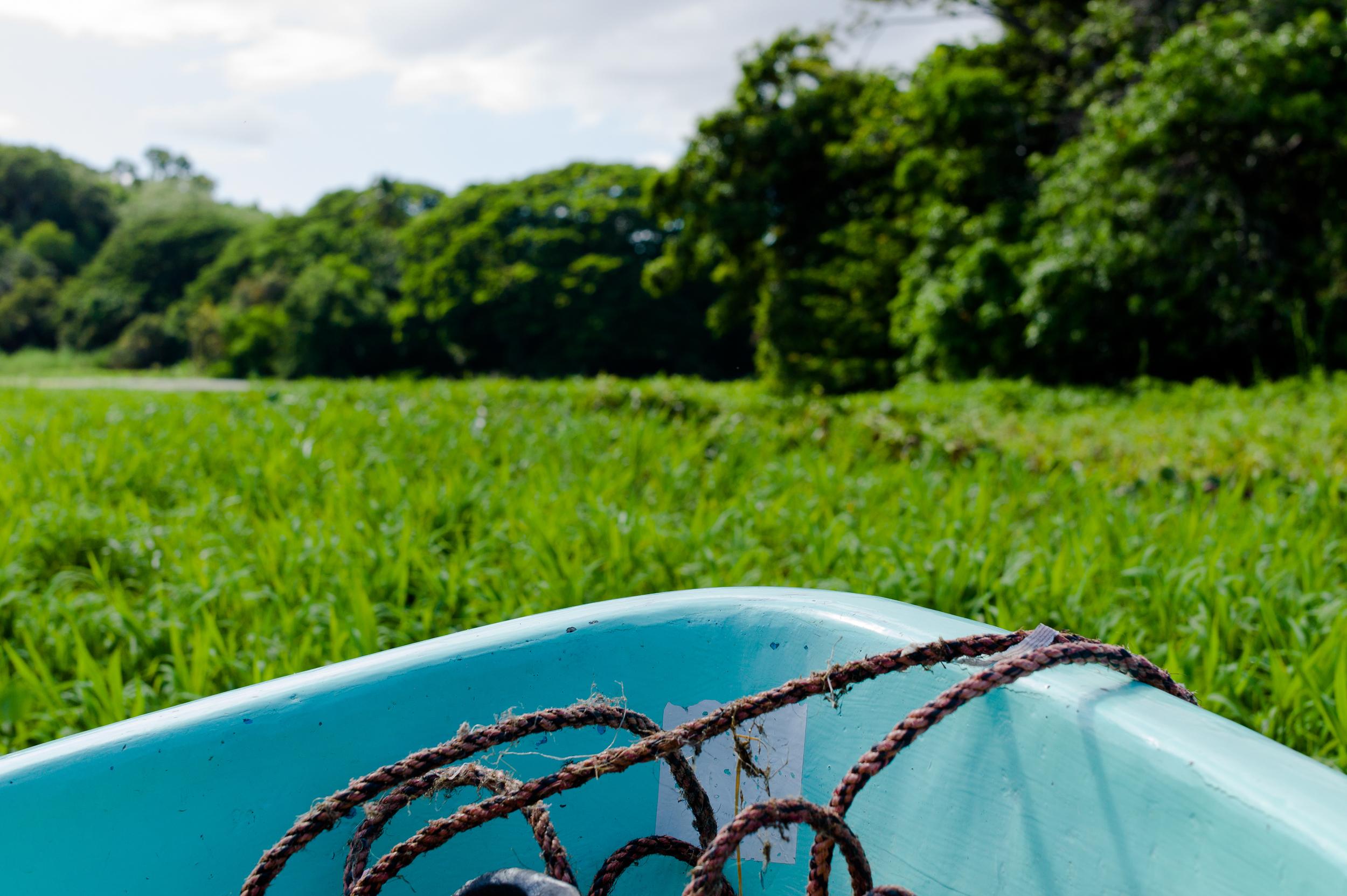 boat grass-1.jpg