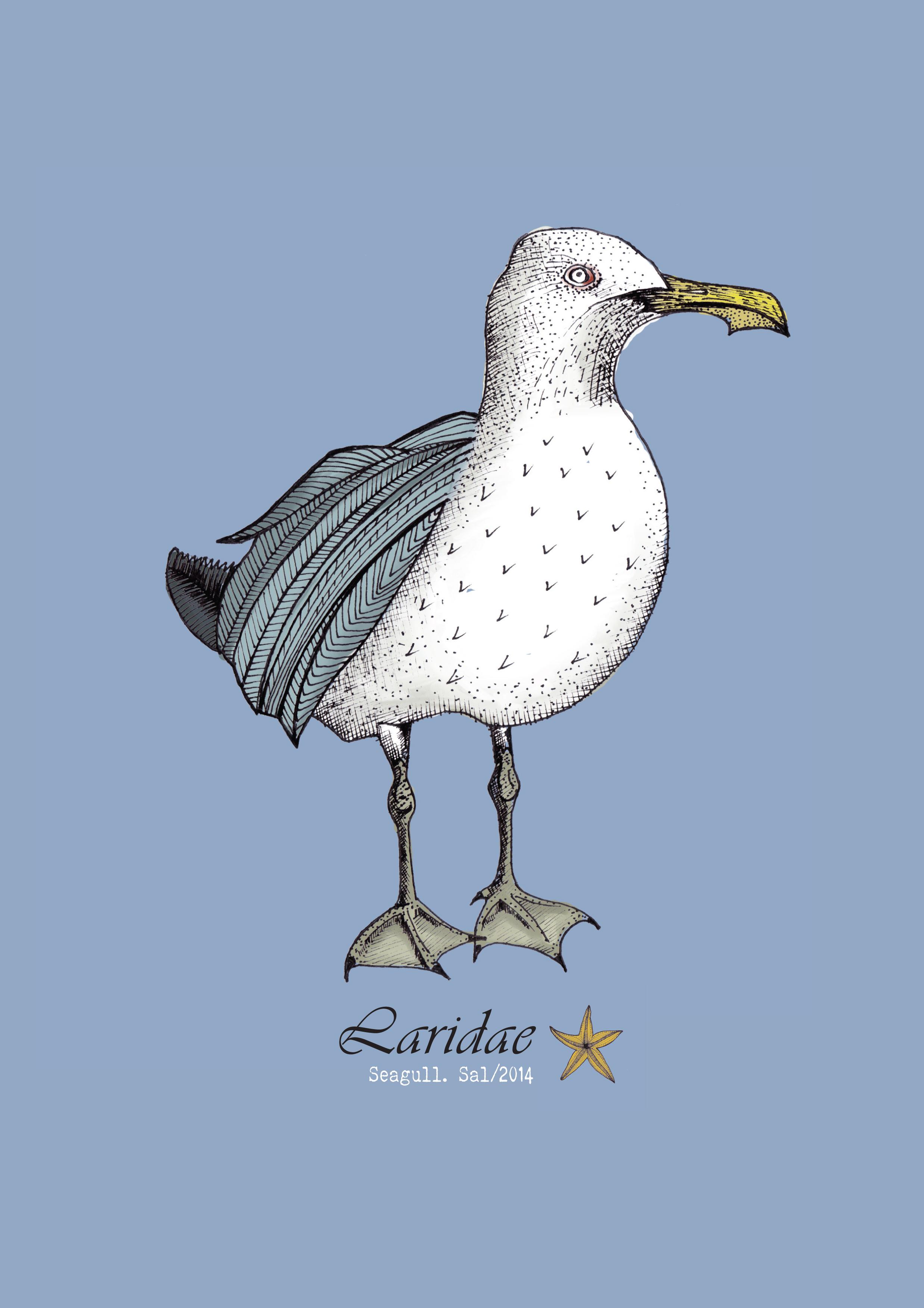 A4 Seagull frame.jpg