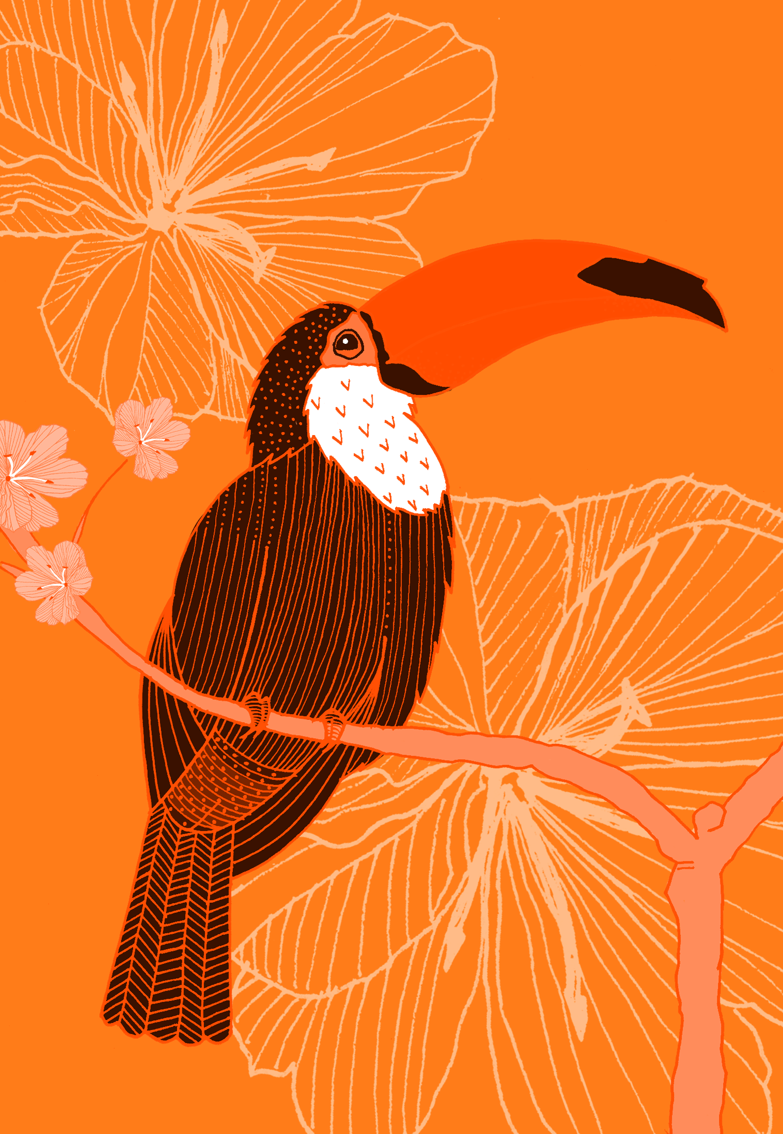 orange-toucan--flat.png