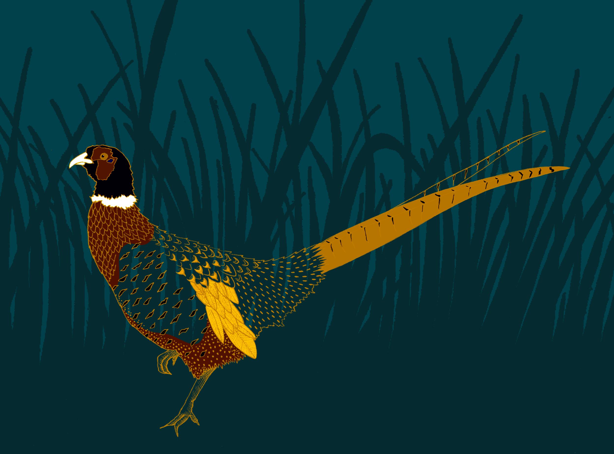 Pheasant-play.png