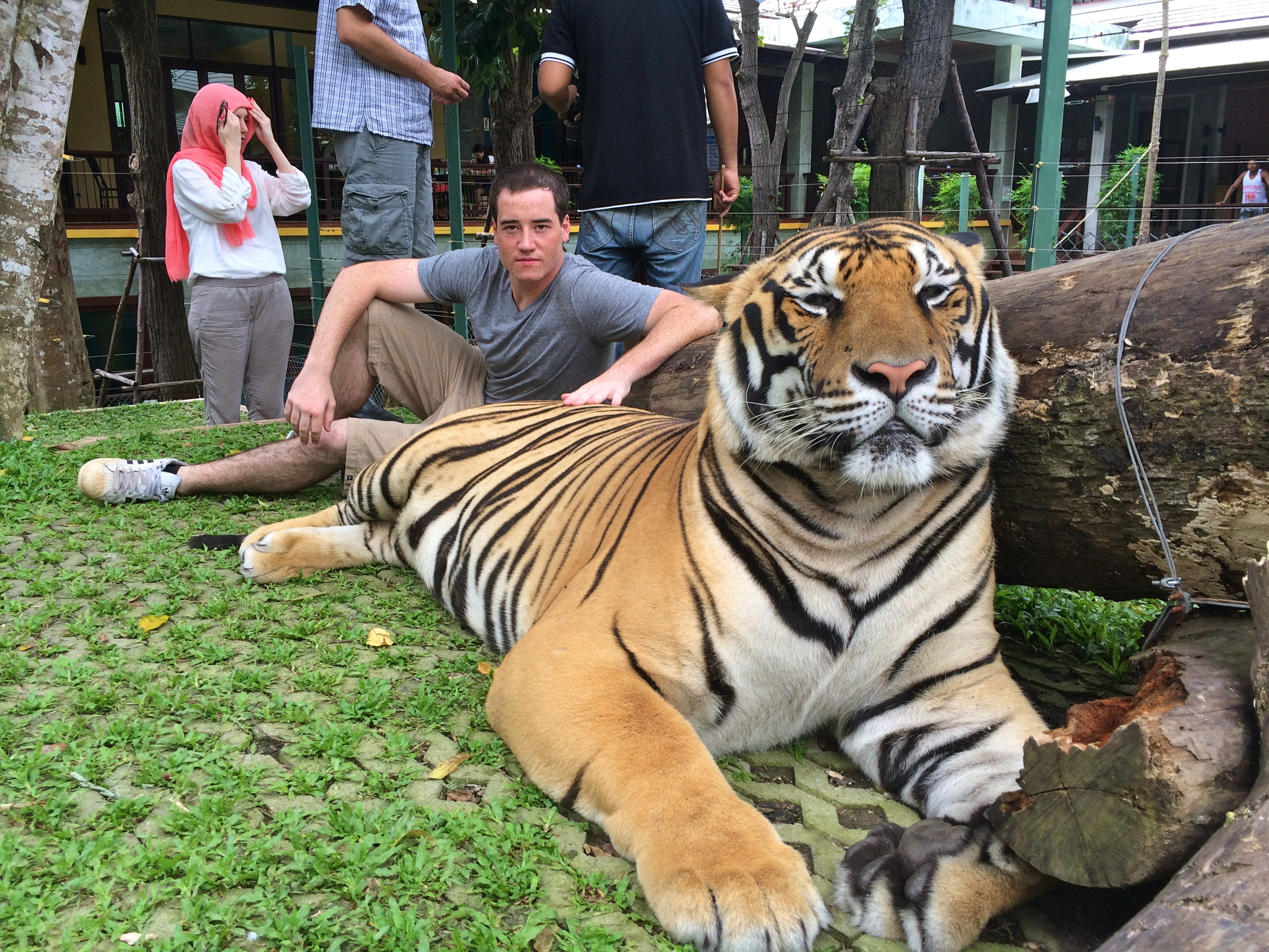 With the Big Cats, Phuket