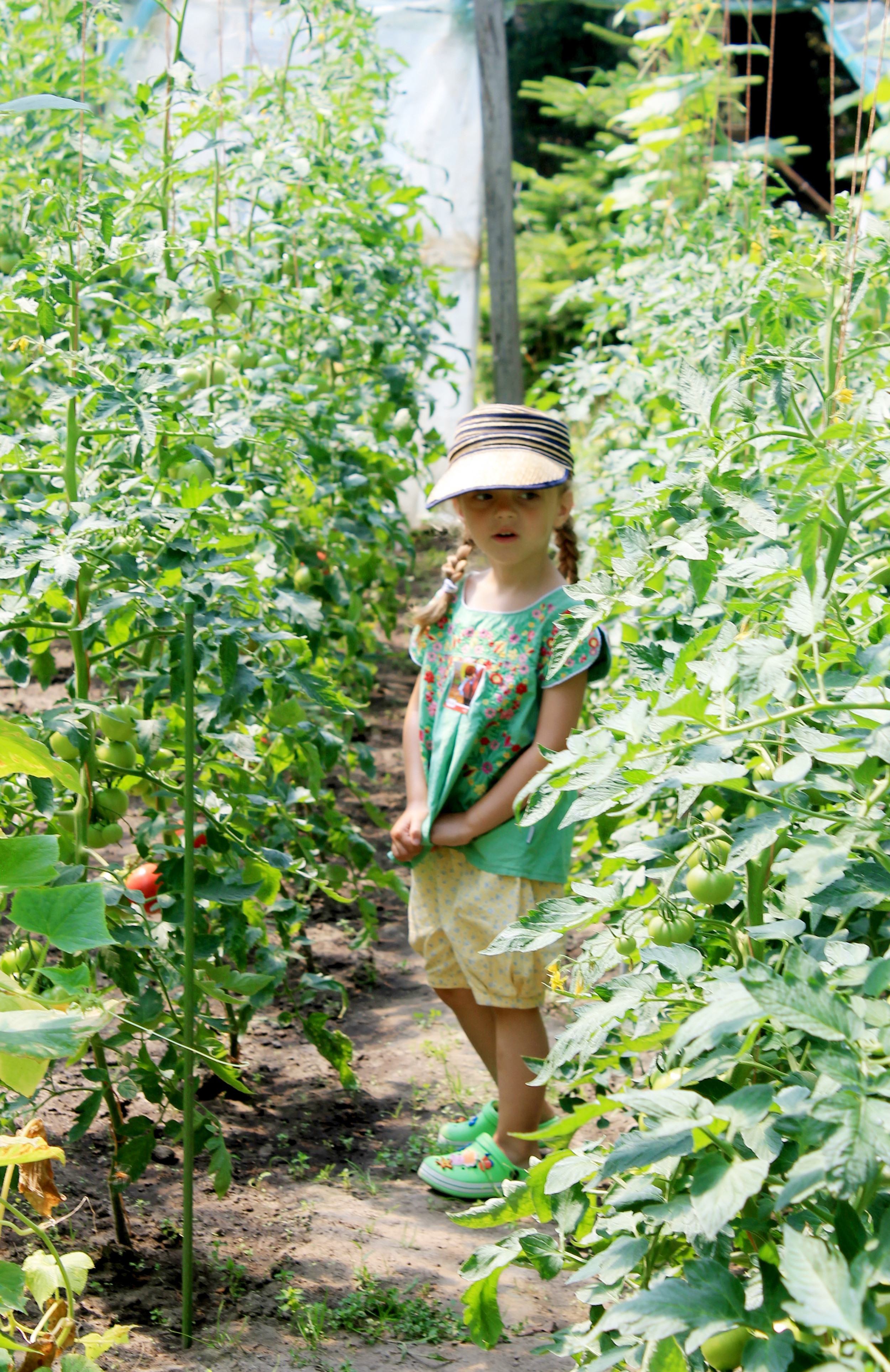 Tosia i pomidory