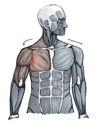 MuscleTensionShoulderWeb.jpg