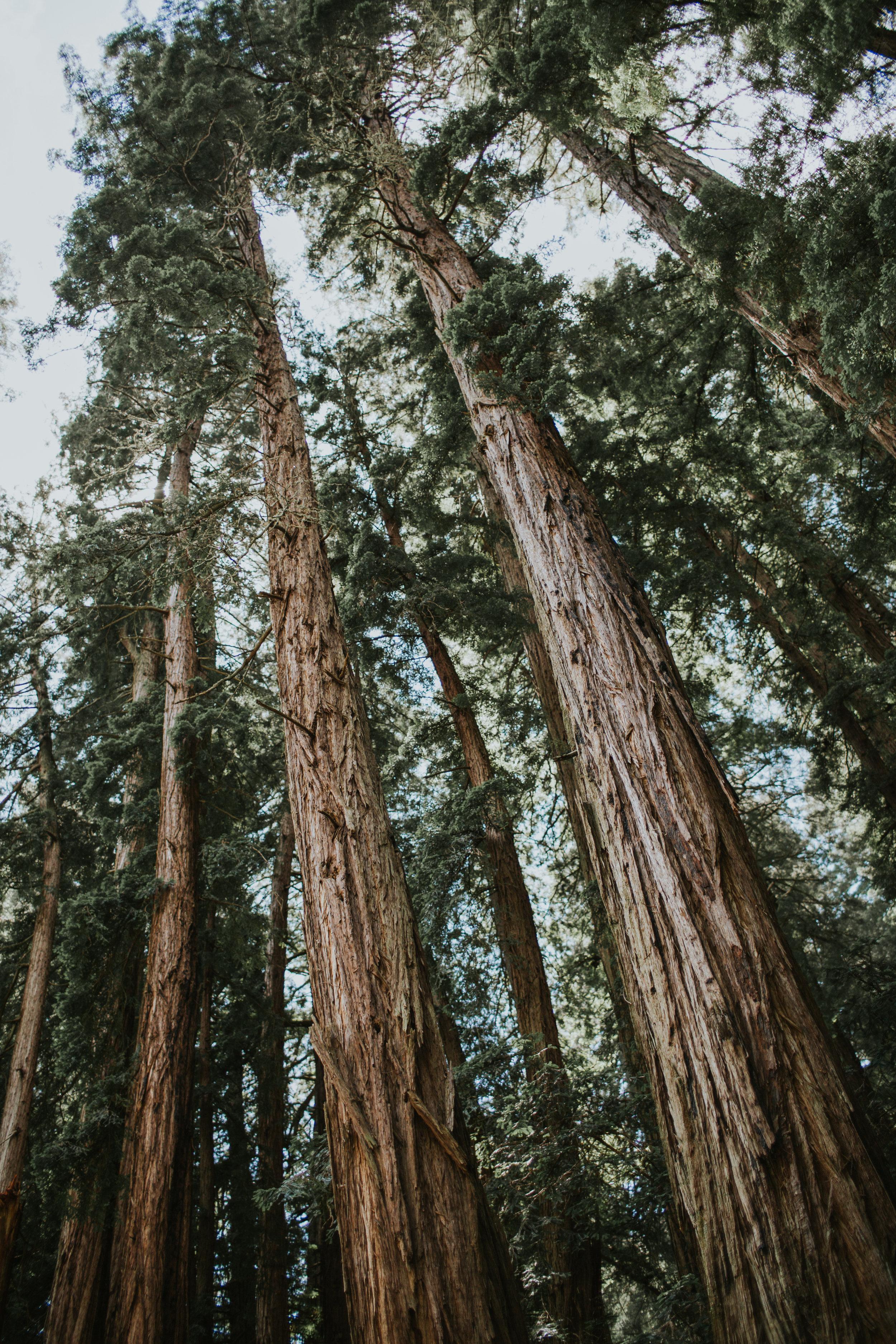 oak1 (29 of 32).jpg