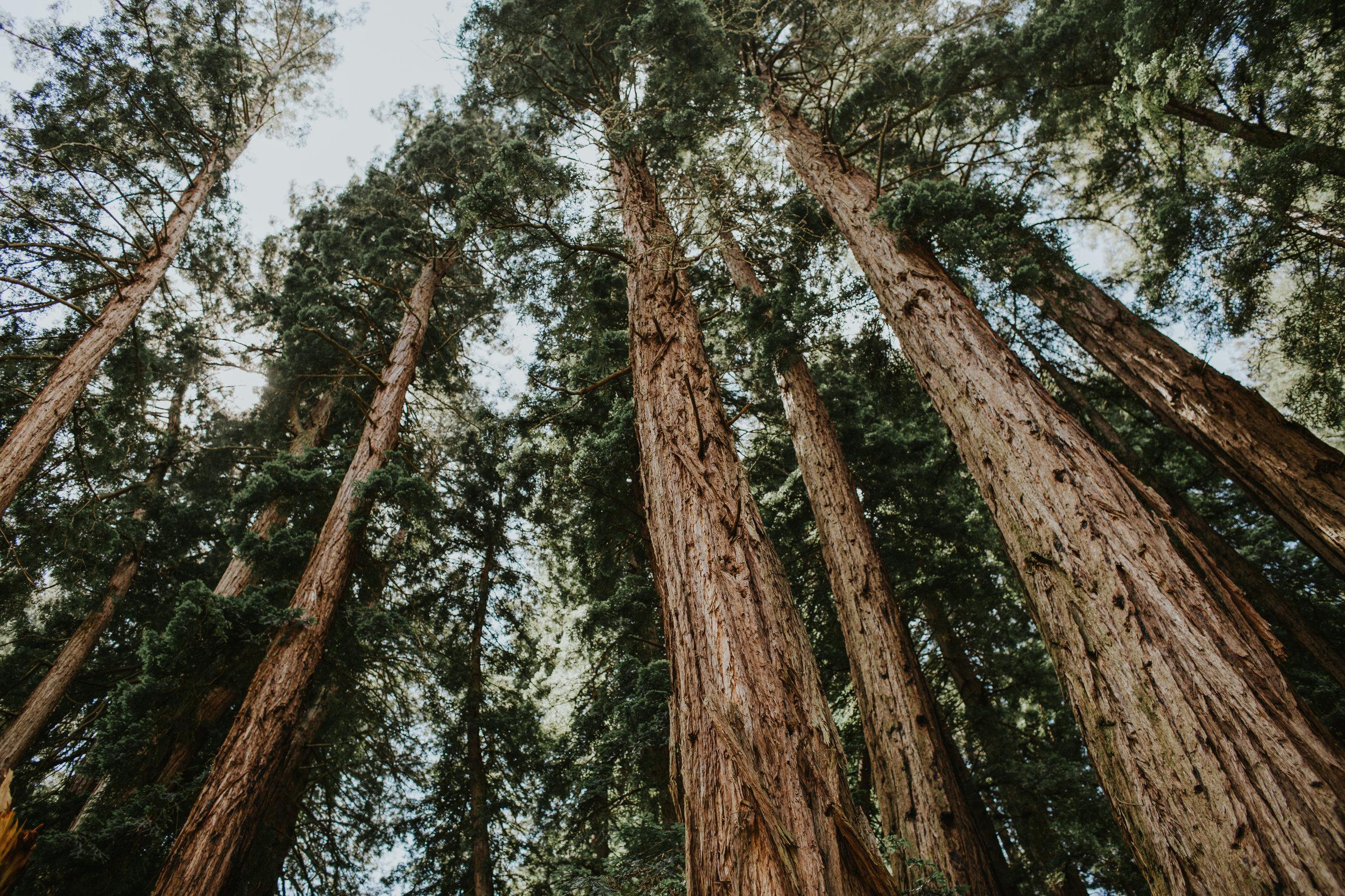oak1 (31 of 32).jpg