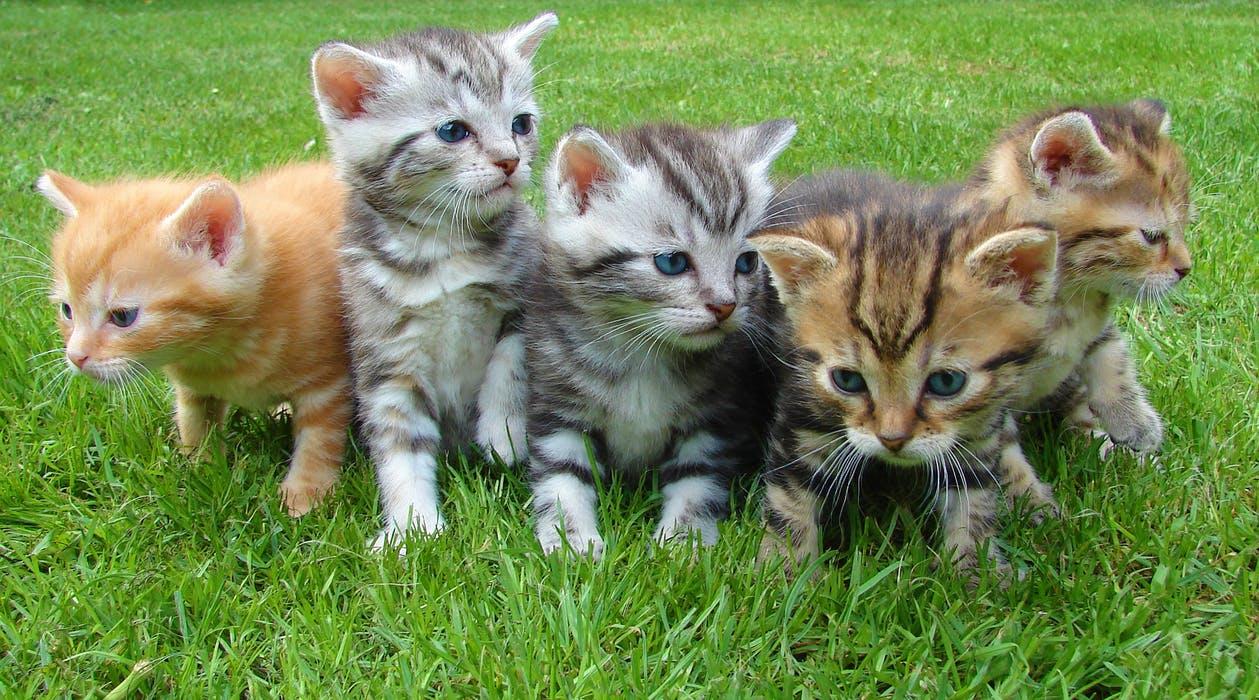 kittens-grass.jpeg