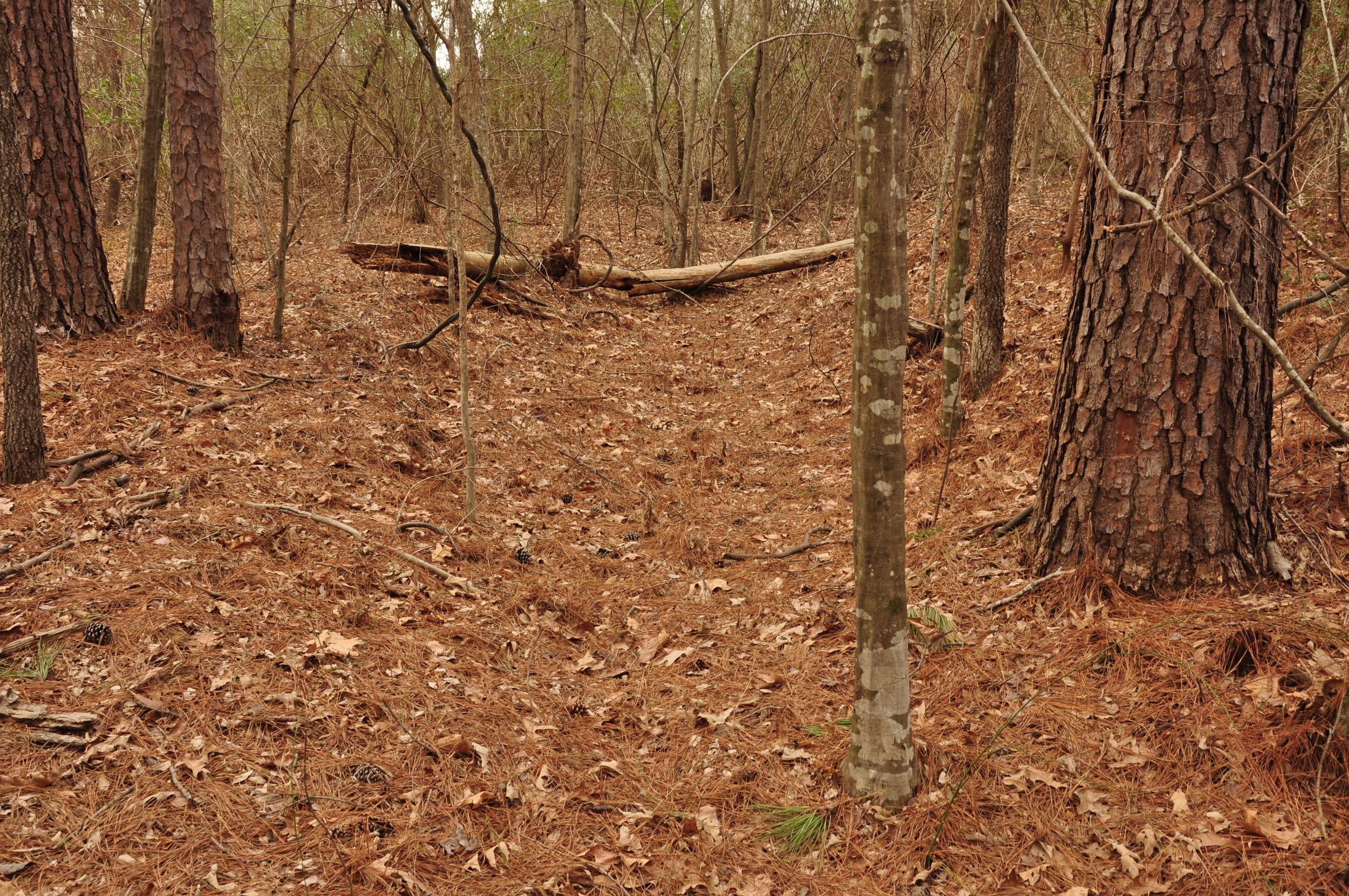 Visible ruts in wooded land