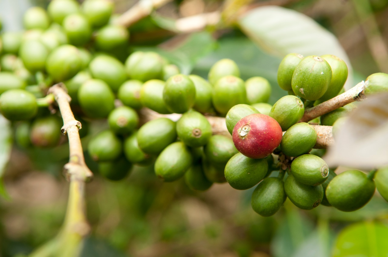 Arabica vs Robusta, May 2013
