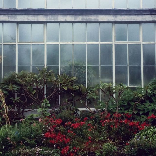 Facade. #auckland #greenhouse #nature