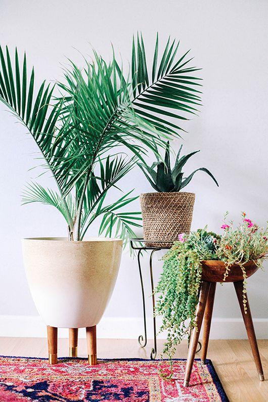 corner-plants-and-pots