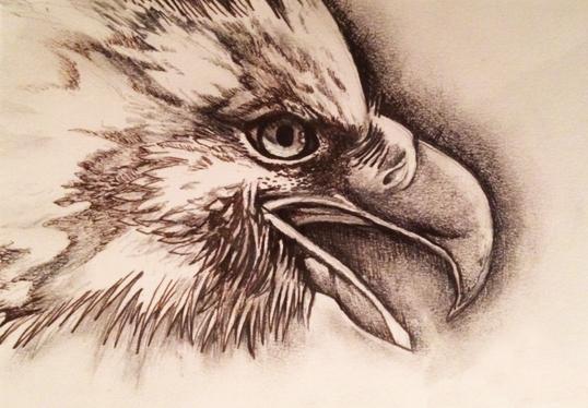 DRAWING | EAGLE
