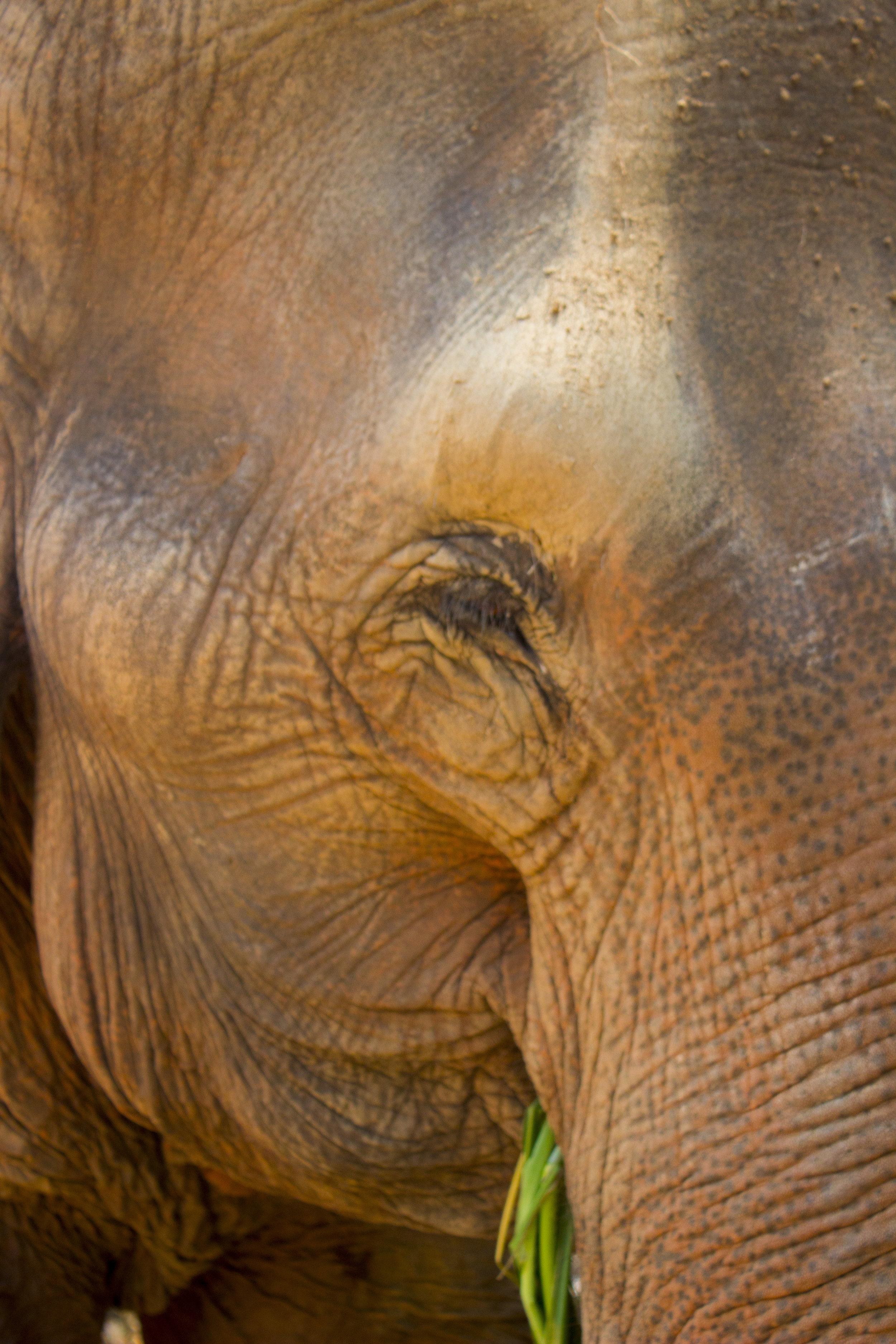 ElephantSanctuary_2.jpg