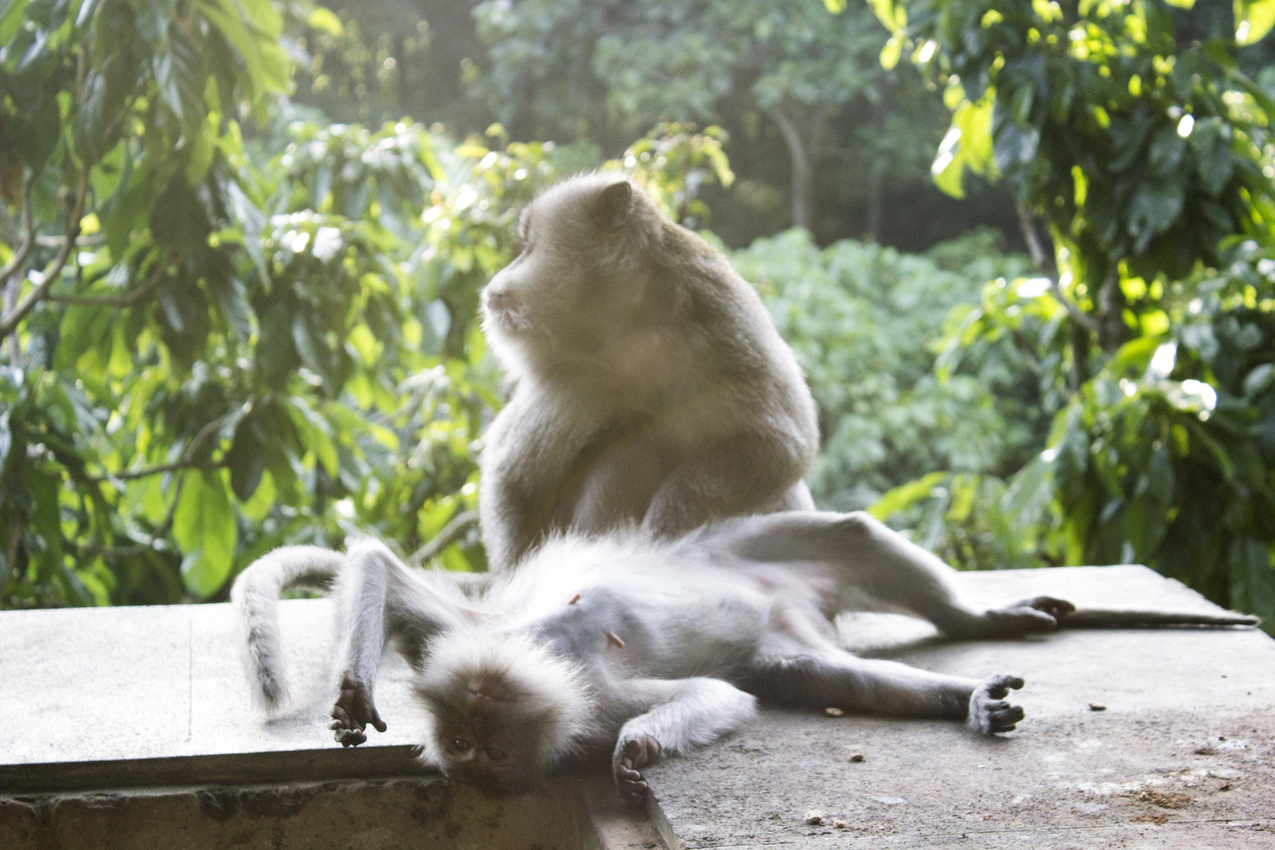 MonkeyForest__1.jpg
