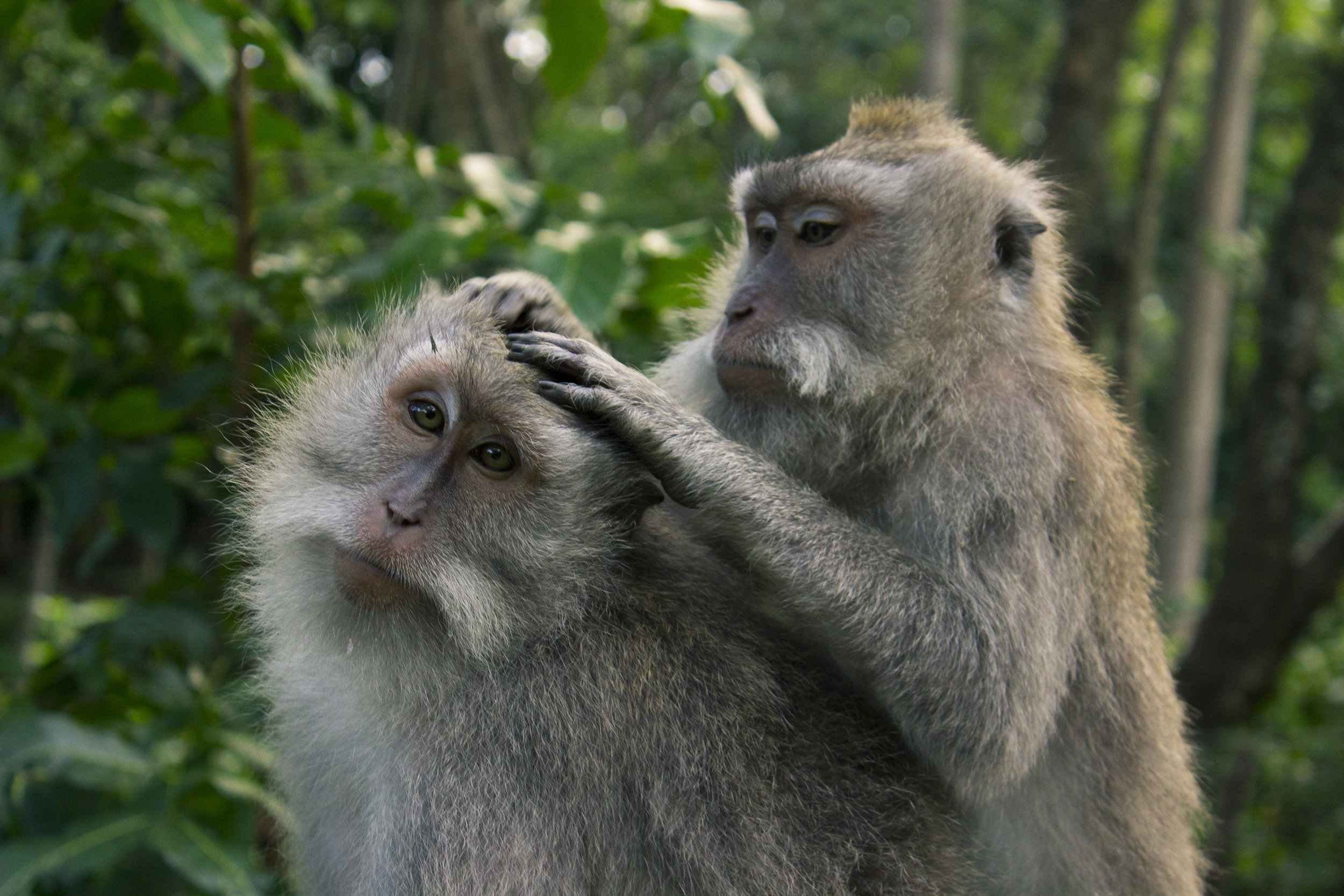 MonkeyForest__2.jpg