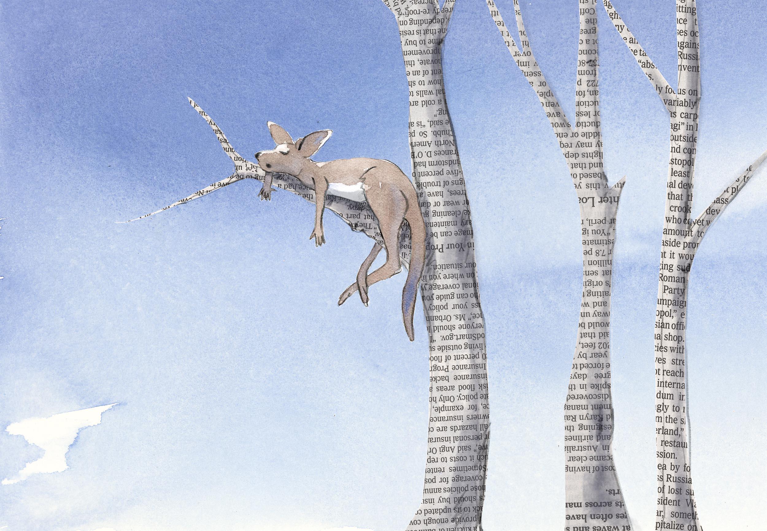Roo in newspaper tree.jpg