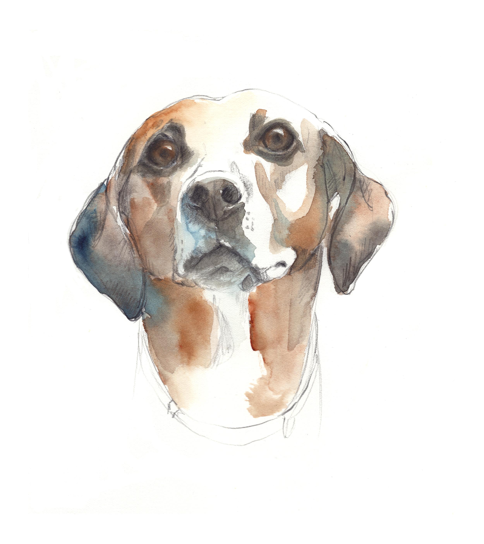 haley's dog2017 for website.jpg