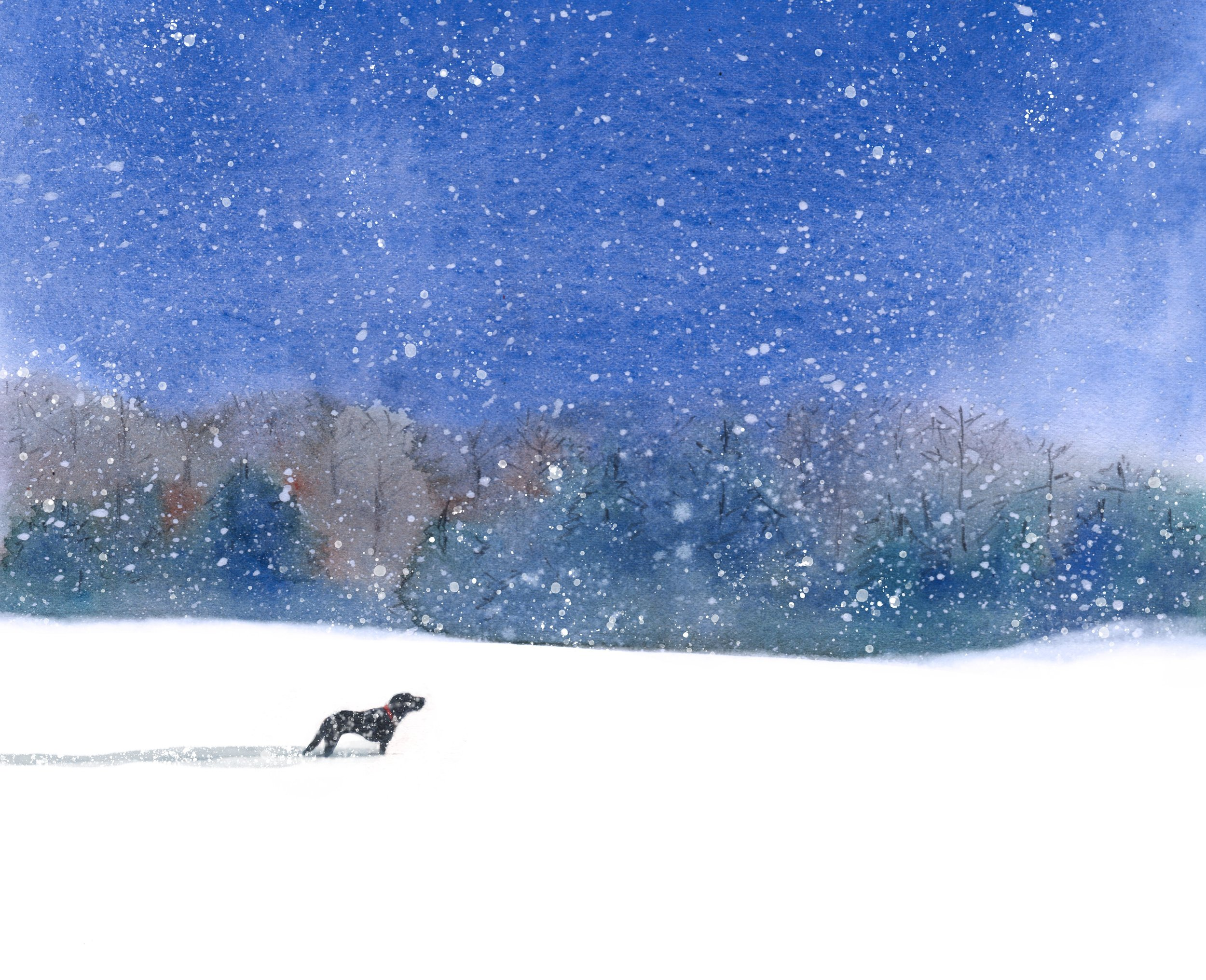 calvin in snow nov28almost5psd.jpg