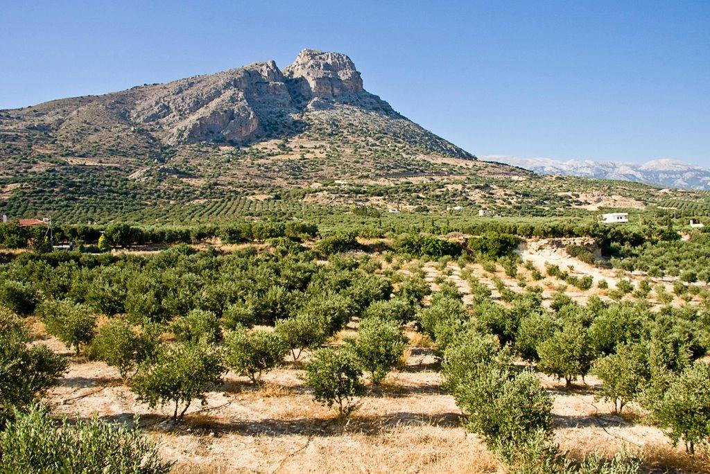 kouzini extra virgin olive oil kasandrinos