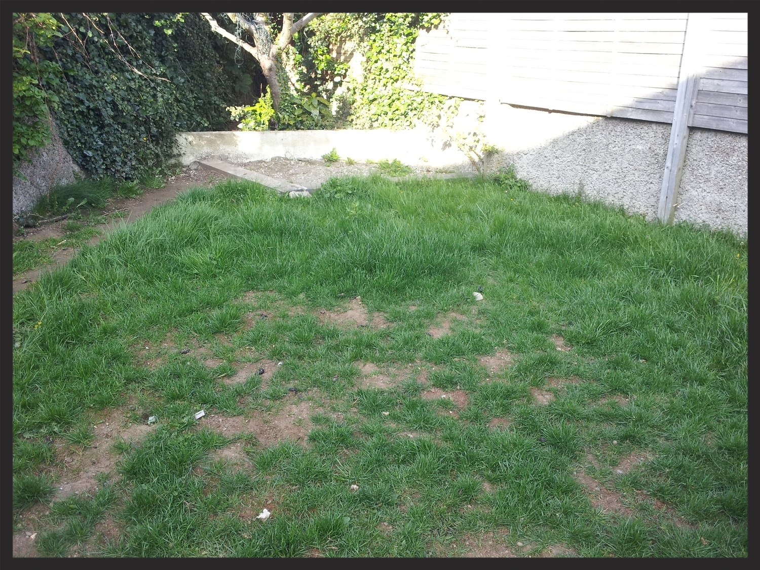 Lawn in need of replacing