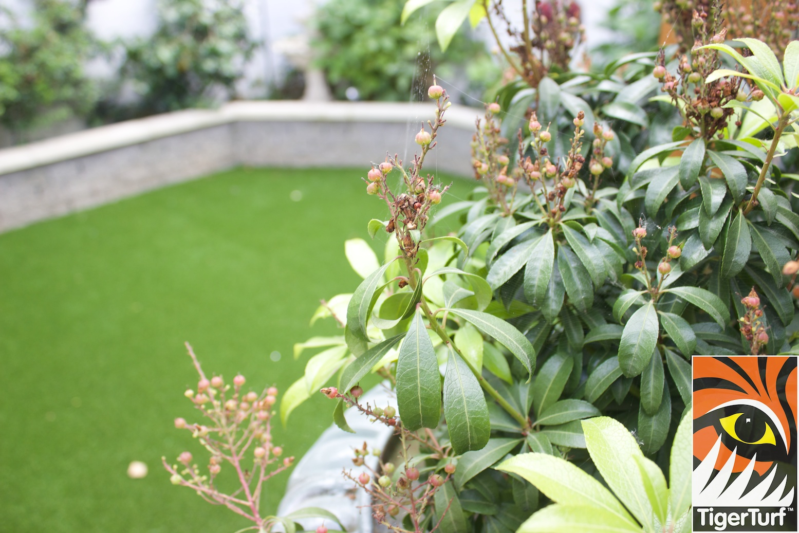 Garden designed with TigerTurf Lawn