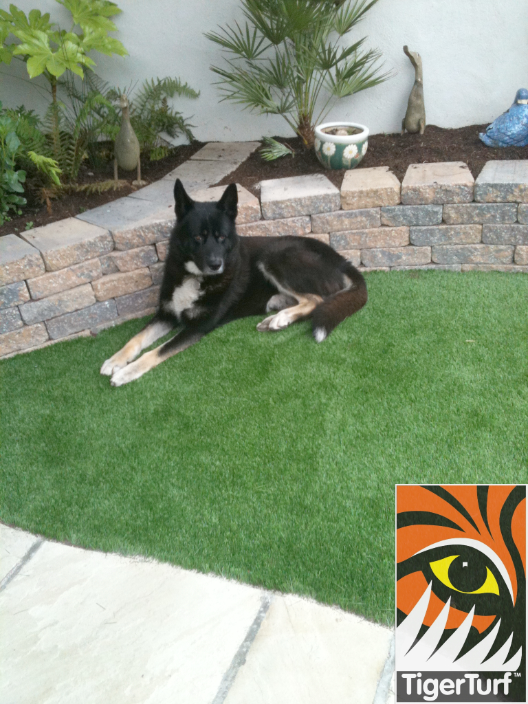 wolf dog on grass