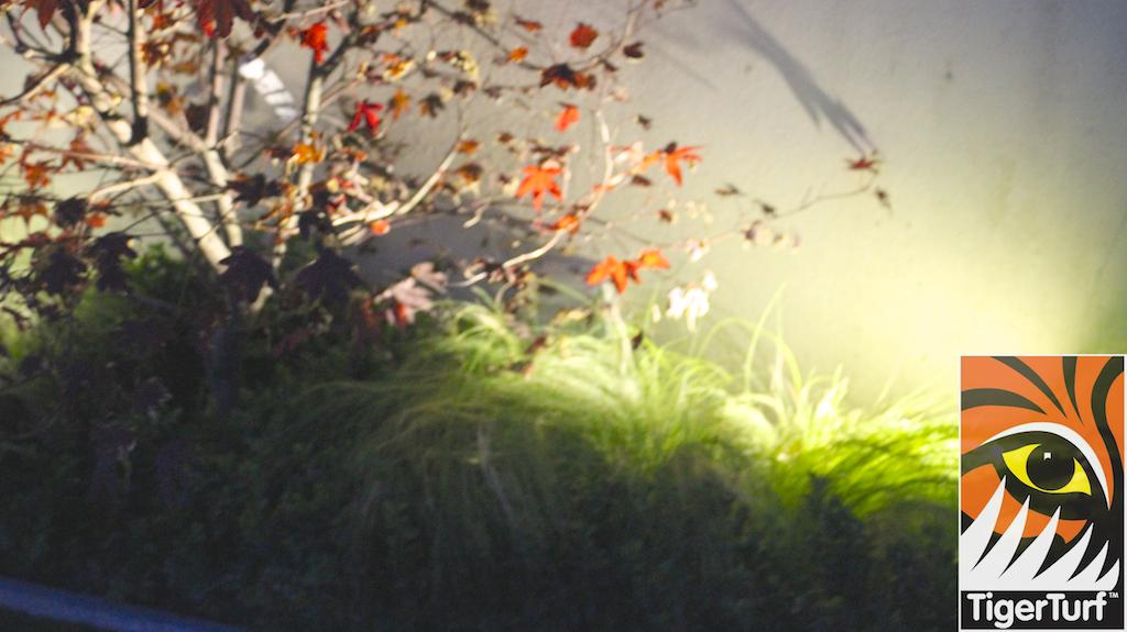 night light in garden