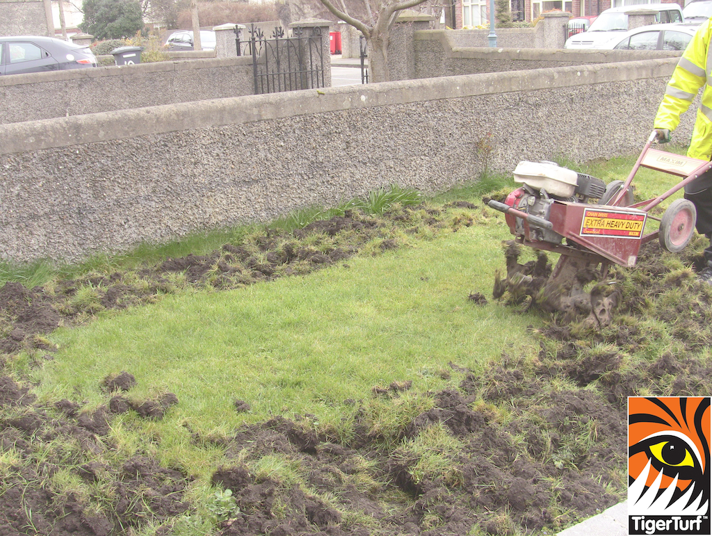 Rotovation of lawn for Drainage