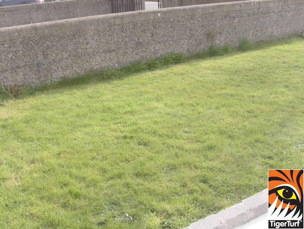 Lawn before being excavated