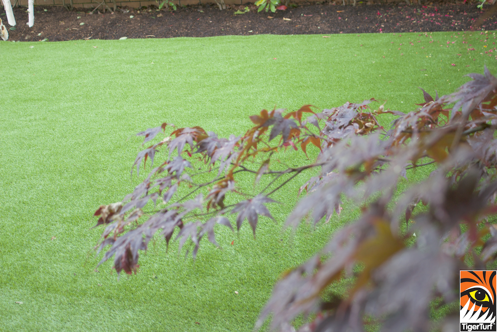 TigerTurf and Maple Tree
