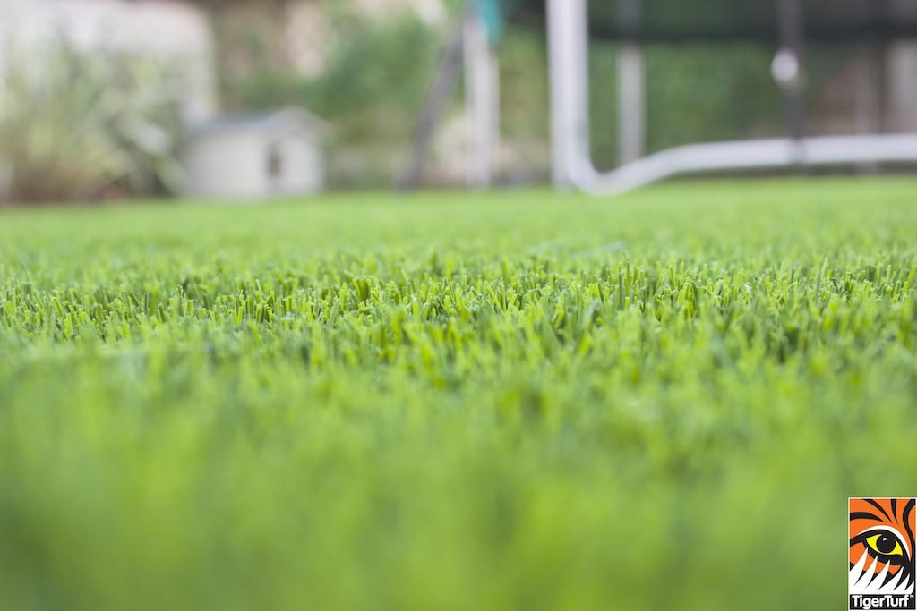 Close up of TigerTurf Lawn