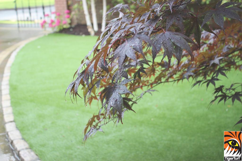 TigerTurf in Front Garden