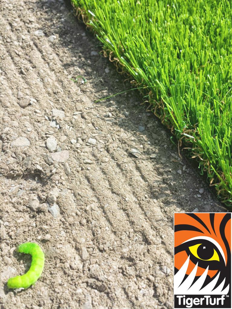 green lawn turf seaming