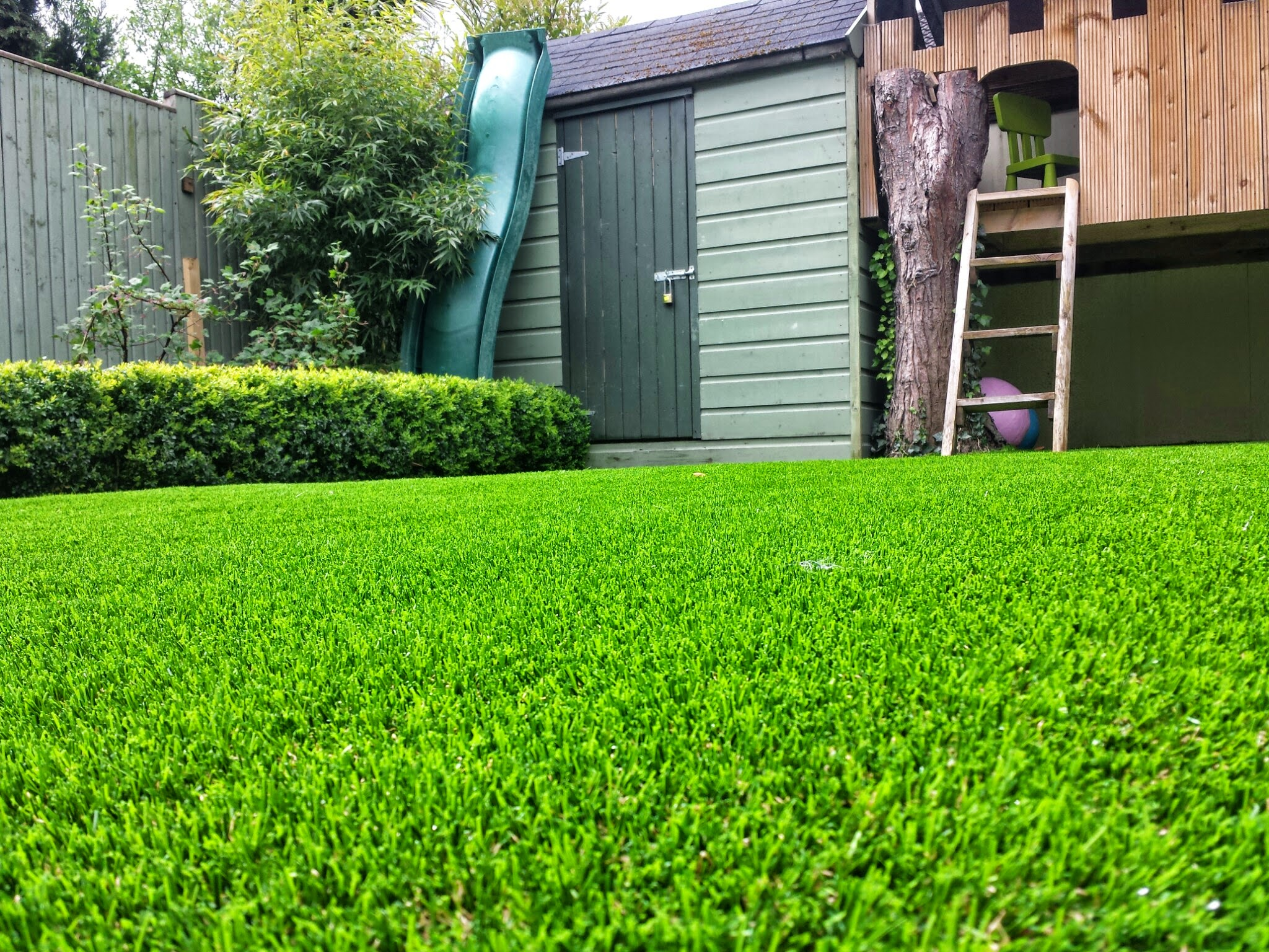 TigerTurf lawn and buxus hedge