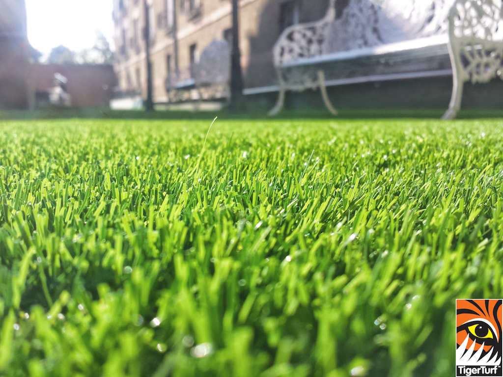 grass in Bewleys Dublin 4