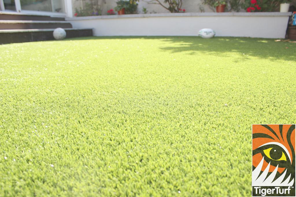 TigerTurf lawn Close up