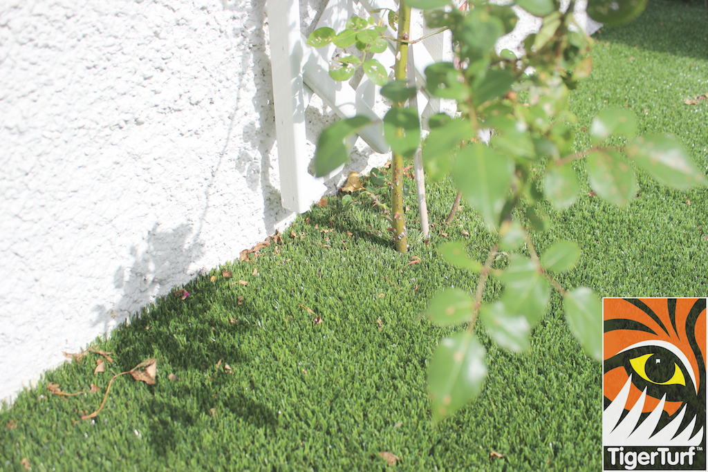 Rose and artificial Grass