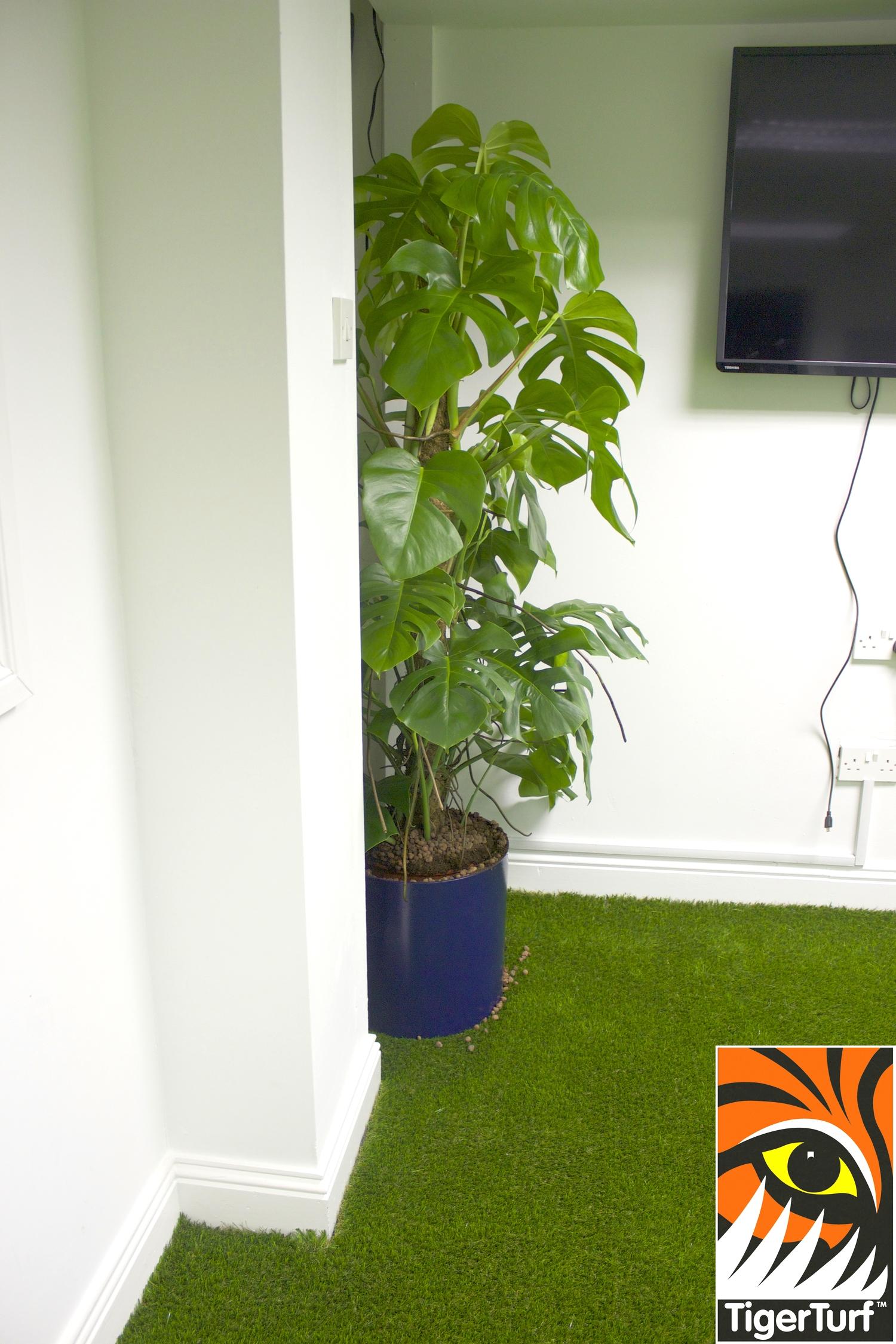 TigerTurf Office HQ