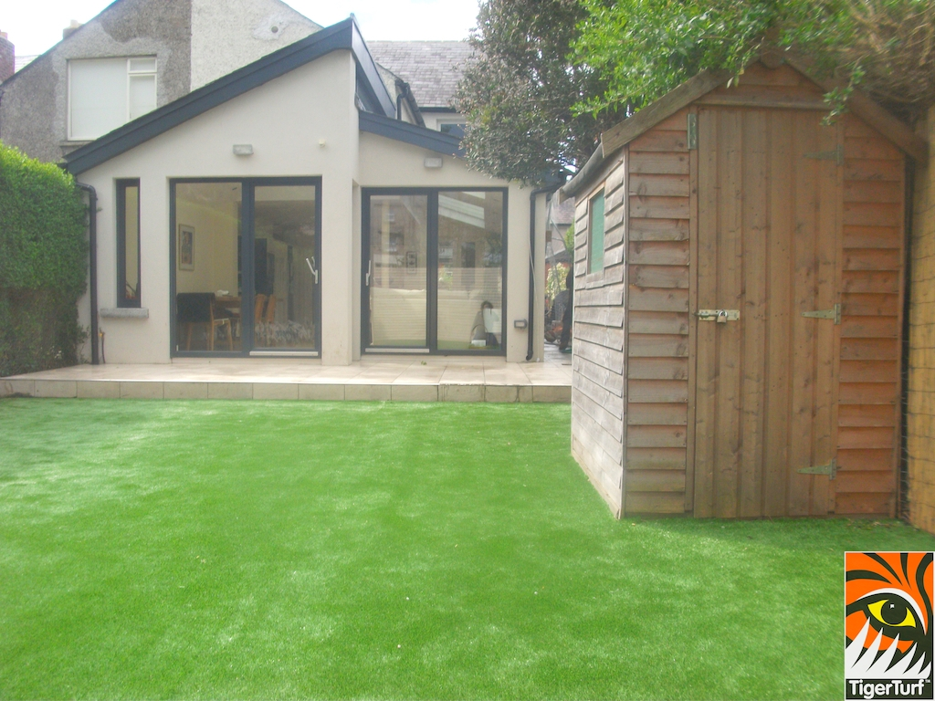 TigerTurf finesse lawn with shed
