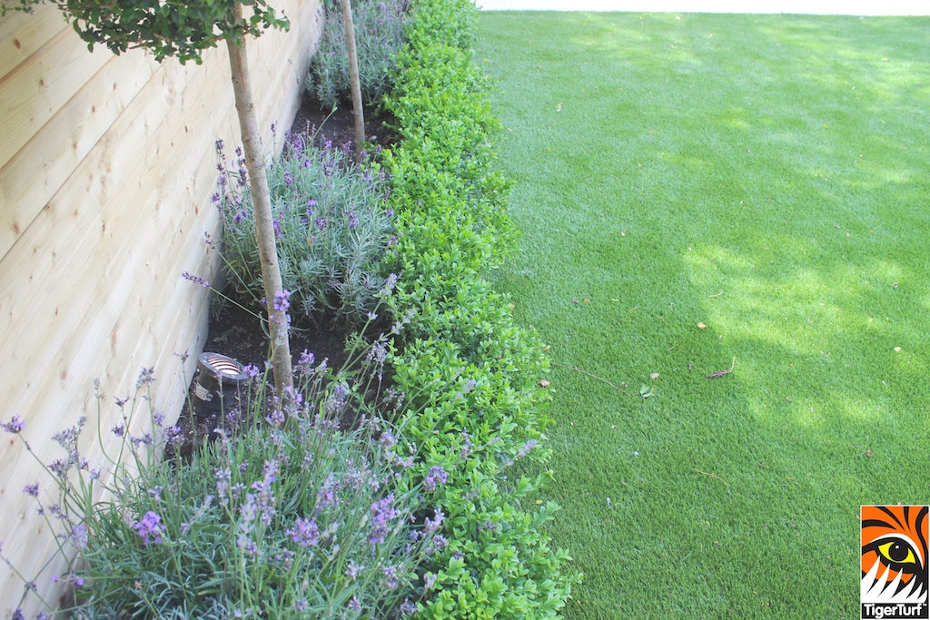 TigerTurf lavender and buxus