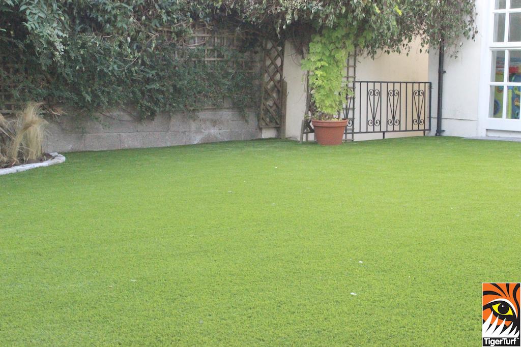 new garden lawn