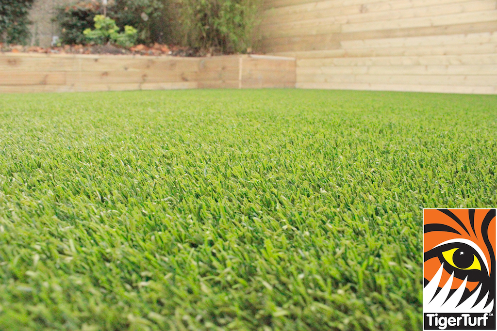 fibers of grass
