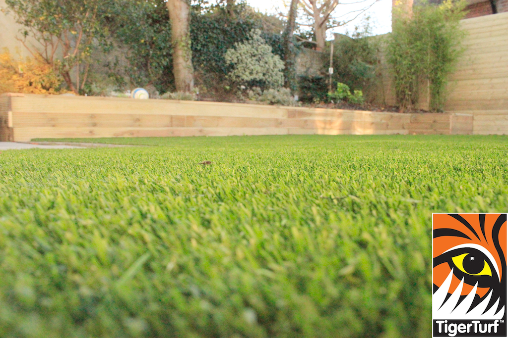 close up of lawn