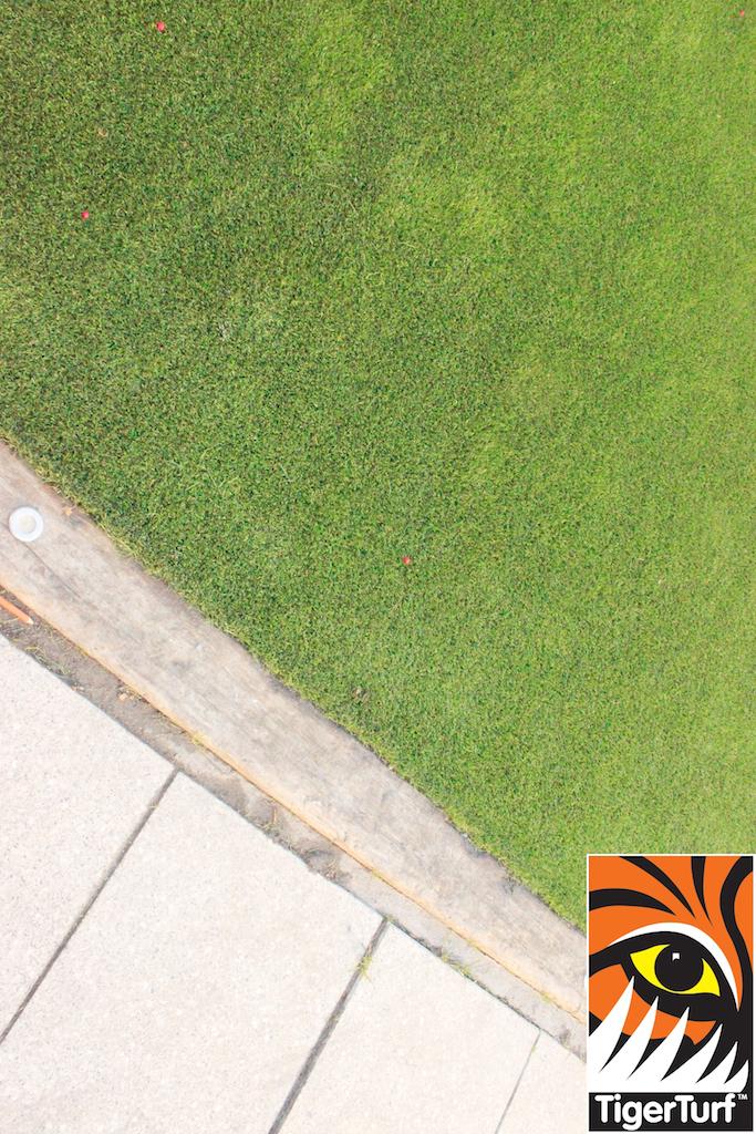 grass from tigerturf